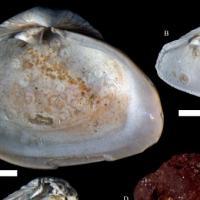 Изменение климата может повлечь увеличение популяций морских паразитов