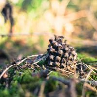 Черешневые плантации и лесостепь: какими станут леса в Беларуси?