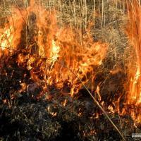 Косить или сжечь? Учёные спорят, как остановить зарастание болот