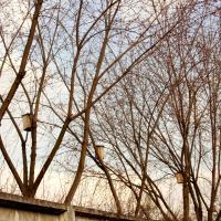 Юрист о новых нормах: так ли опасны «опасные деревья»?