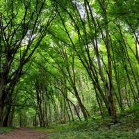 Меняется климат – меняется лес