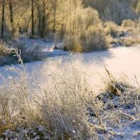Лесной кодекс: о поправках говорили в октябре, о решении не объявили