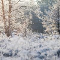 """""""Иметь столько FSC-сертифицированных лесов и до сих пор не стать частью системы - это беспрецедентно"""""""