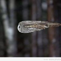 Видеоблог про сов, ящериц и кота: знакомимся с орнитологом