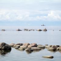 Истории у моря: «Тут полная нищета и всё разваливается… А вы гусей спасаете!»