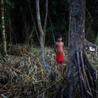 ООН хочет укрепить экологические права. А в 2017 году убили 197 экоактивистов