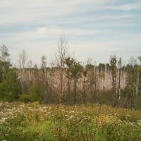 День всех деревьев: устоят ли леса перед климатом, а городские посадки – перед человеком?