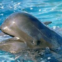 Большинство дельфинов-гринд погибло у берегов Новой Зеландии