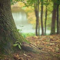 Сегодня дерево растёт, а завтра нет. Утвердит ли министерство Схемы озеленённых территорий?