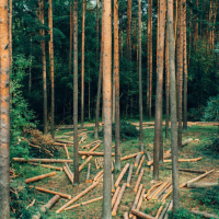 Норвегия первой в мире полностью отказалась от вырубки леса