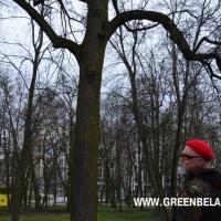 Экскурсія з «Гарадскім ляснічым»: Пра што шэпча «губернатарская» ліпа і маўчыць 130-гадовы ясень «Апалон»?