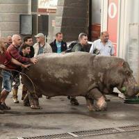 Наводнение в Тбилиси: Зоопарк требует разобраться с убийством животных