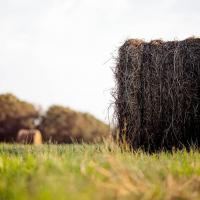 Сельское хозяйство в Беларуси: интенсивность возрастёт, но и органическое земледелие выйдет из тени