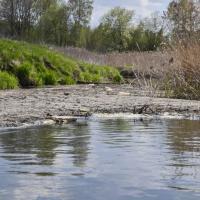 Как беларусские животноводческие фермы загрязняют Балтийское море