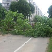 Всё ради магазина: «Зеленстрой» за 10 минут спилил деревья в Серебрянке
