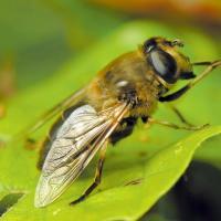 А птицам питаться чем? За 27 лет количество насекомых в Германии уменьшилось на 75%