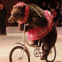 Италия объявила о том, что запретит цирки с животными