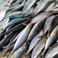 Рыба станет новым поводом для международных конфликтов