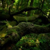 В Польше заявили, что продолжат работы по вырубке деревьев в Беловежской пуще