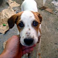 Бездомные животные ДО и ПОСЛЕ: жизнь от улицы до нового дома