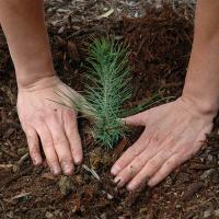 С 28 марта по 4 апреля в Беларуси пройдет «Неделя леса-2015»