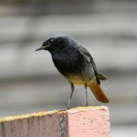 О птицах заказника «Соколиный» расскажут информационные таблички