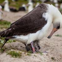Самая старая в мире дикая птица стала мамой в 64 года