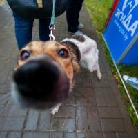 Счастливых животных в Минске стало чуть-чуть больше(фото)