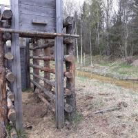 «Хитрые вы, налибокские!» Как проект «Ветландс» планирует помогать беларусским зубрам