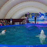 «Животным в контейнерах не может быть хорошо». В Беларуси запустили петицию против передвижных дельфинариев
