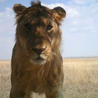 Фотоловушки засняли редких и неуловимых животных Африки в разных ракурсах