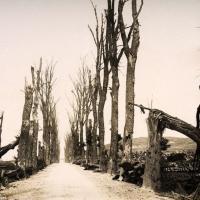 Міжнародны дзень прадухілення эксплуатацыі навакольнага асяроддзя падчас вайны і ўзброеных канфліктаў