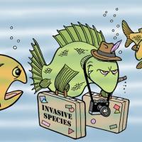 Они навсегда изменят нашу природу: как инвазивные виды завоёвывают Беларусь