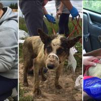 Двух собак живьём сбросили в яму скотомогильника в Логойском районе