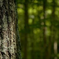 Проект нового Лесного кодекса утверждён без комментариев общественности
