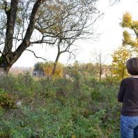 Что помнят деревья Бреста? Гайд по вековым зелёным соседям с Городским Лесничим (фото)