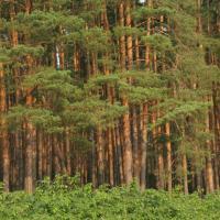 Новый Лесной кодекс изменит не только способ классификации лесов