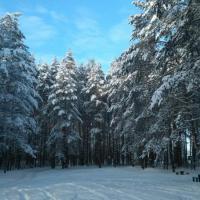 Лесной кодекс: общественные обсуждения до 10 февраля