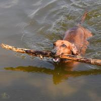Собачье место: как (не) найти пространство для прогулки