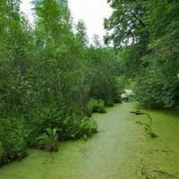 Новый водно-болотный заказник «Белый Мох» поможет сохранить растения и животных из Красной книги