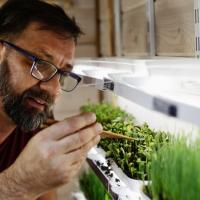 Огород под рукой. Беларусы создали устройство, способное выращивать зелень