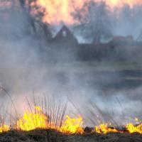 Как часто случаются в Чернобыльской зоне лесные пожары?