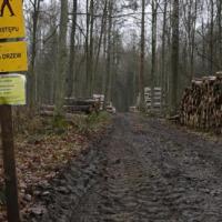 Суд ЕС пригрозил Польше серьёзным штрафом за вырубки Беловежской пущи. Вырубки остановили