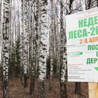Добровольная акция «Неделя леса-2016» установила рекорд по количеству участников