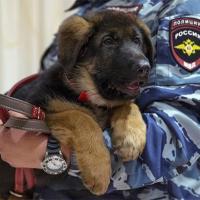 Подаренный щенок Добрыня заступил на службу в Париже (видео)