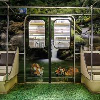 В московском метро курсирует «Полосатый рейс» в поддержку амурского тигра