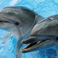 В Санкт-Петербурге запрещена деятельность передвижного дельфинария