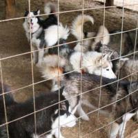Мнение: Кошки и собаки должны размножаться только в аккредитованных питомниках