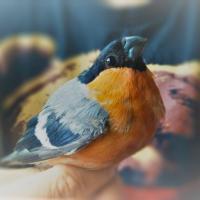 Поход в народ: к птицам