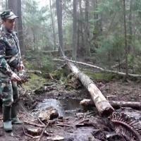 Браконьеру, в петлях которого погиб медведь, грозит штраф свыше 20 000 евро